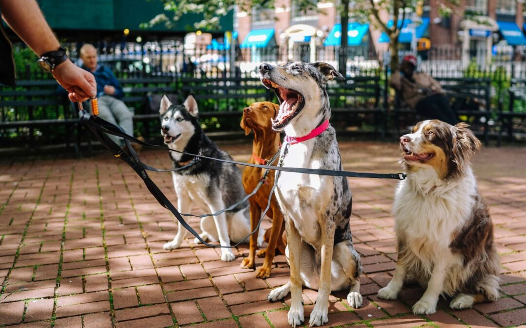 3 Very Important Steps to Becoming a Professional Dog Walker