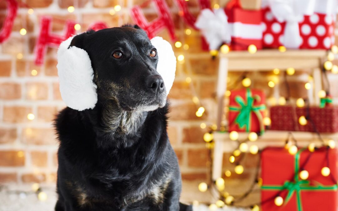 How to Keep Your Pets Safe and Calm During the Holidays
