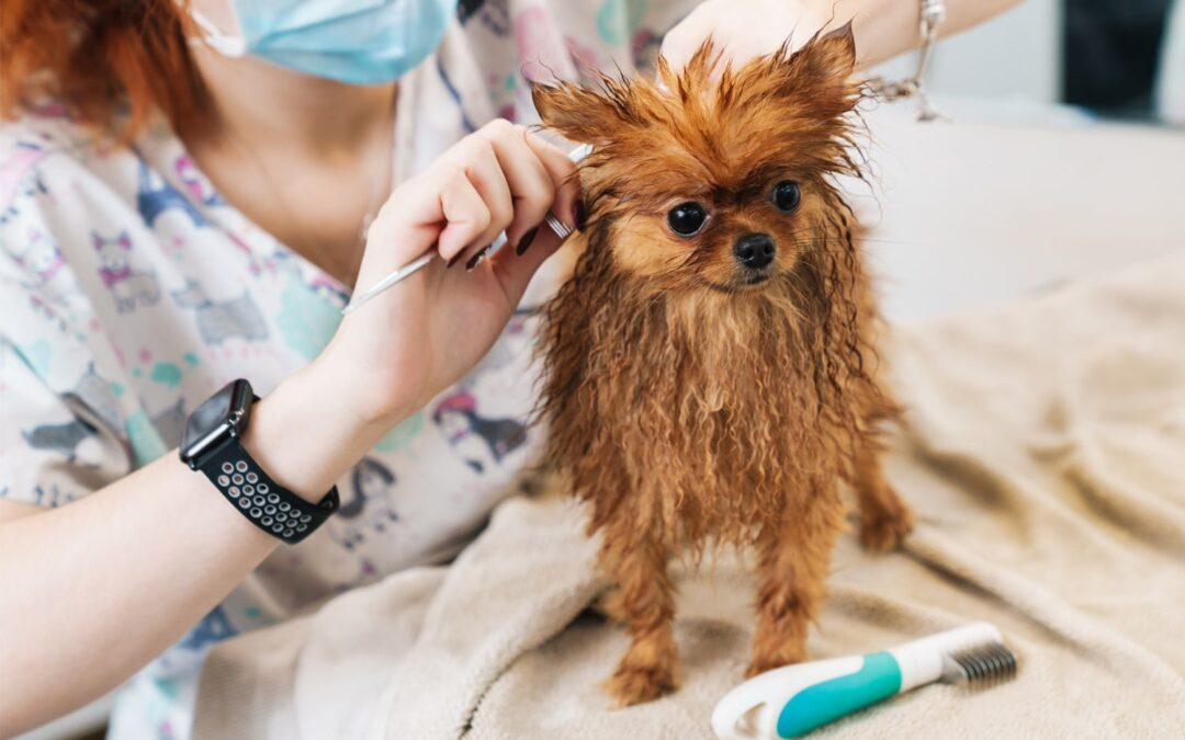 13 Very Important Safety Tips for Dog Groomers