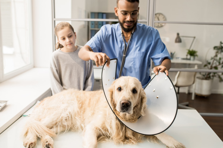 child dog and vet