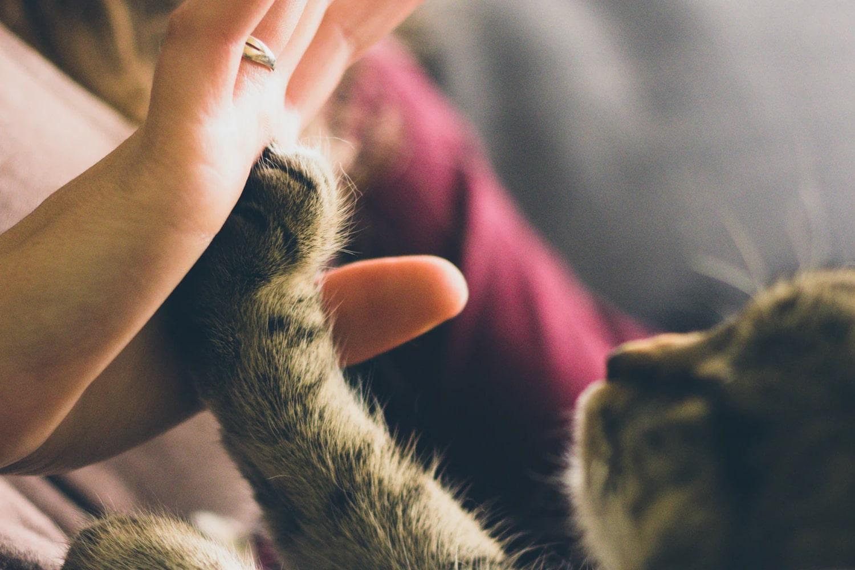 cat high-five