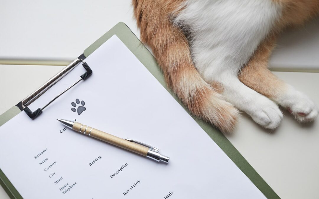 Can Pet Insurance Be Transferred To A New Owner?