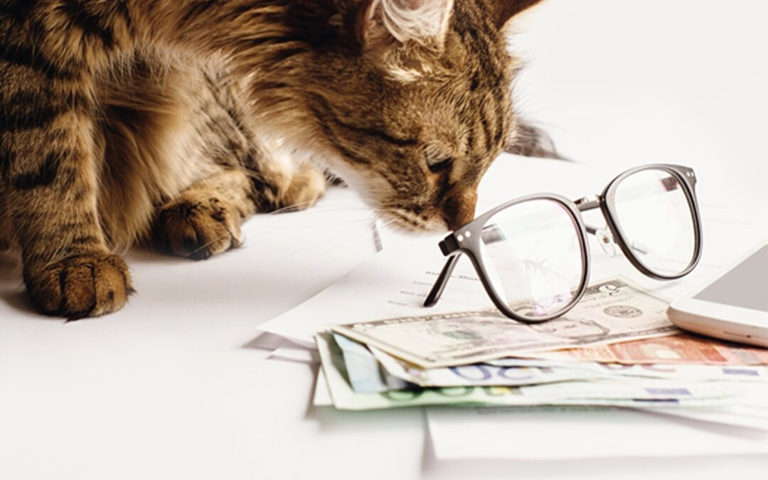How Much Pet Insurance Do I Need?