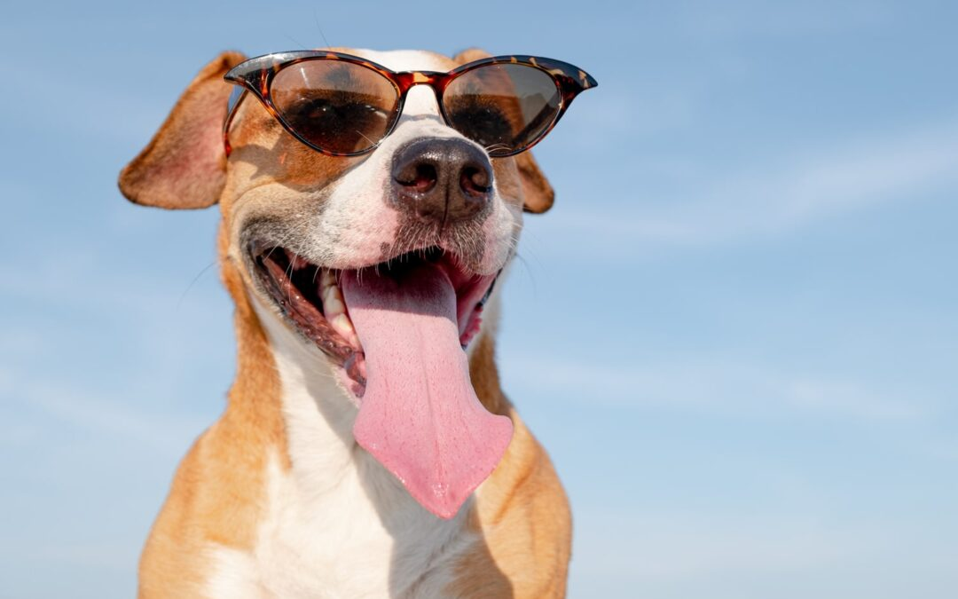 Keeping Pets Safe from the Summer Heat