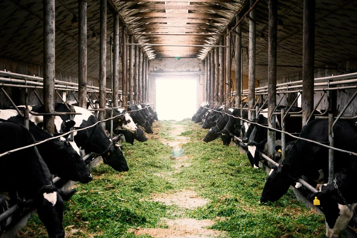 farm insurance image