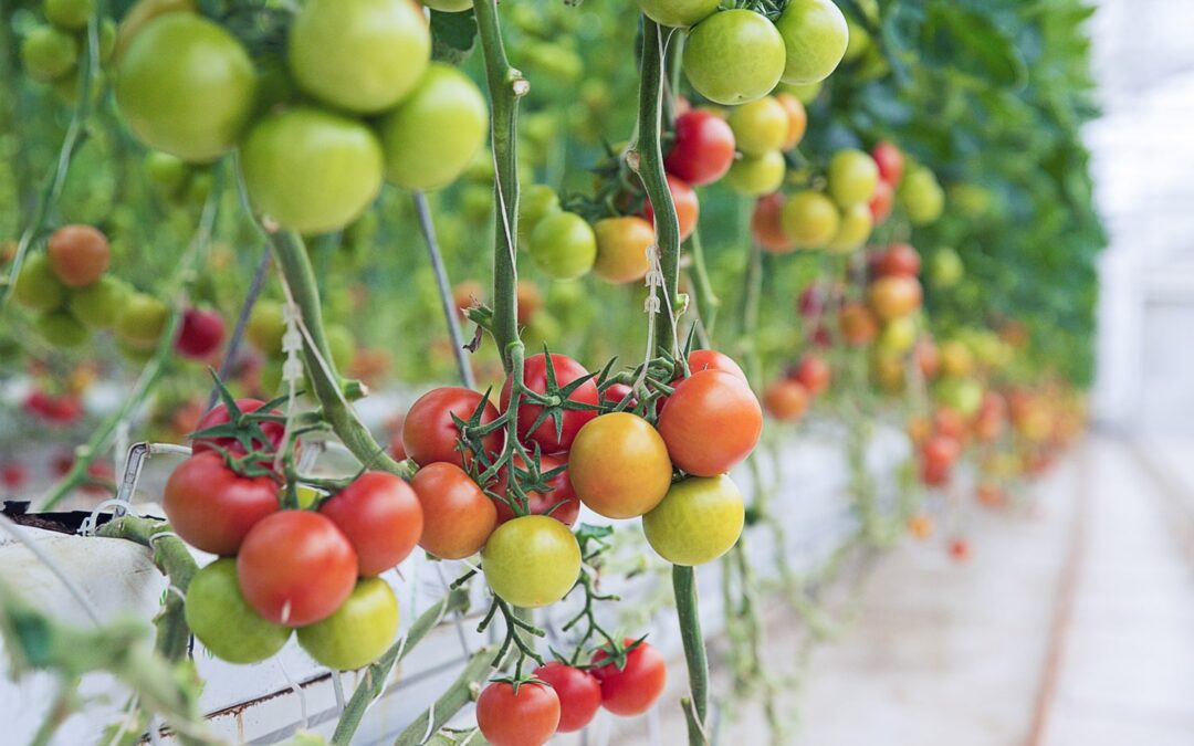 How Is Crop Insurance Price Determined?