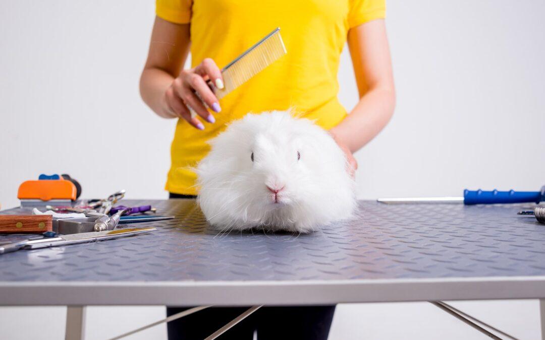 13 Ways To Help You Become An Expert Pet Groomer