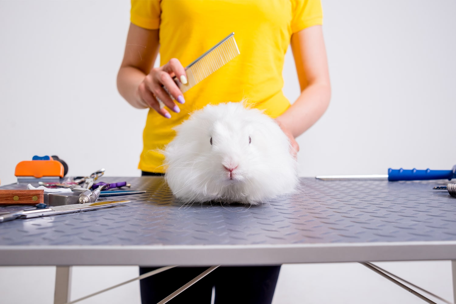 Prepping rabbit for grooming