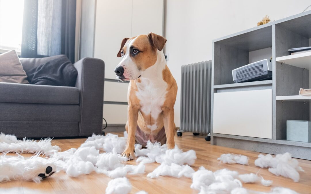 The Best Ways to Solve Pet Behavioral Issues