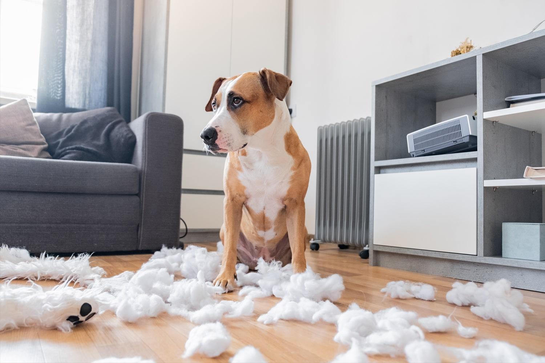 dog made a big mess