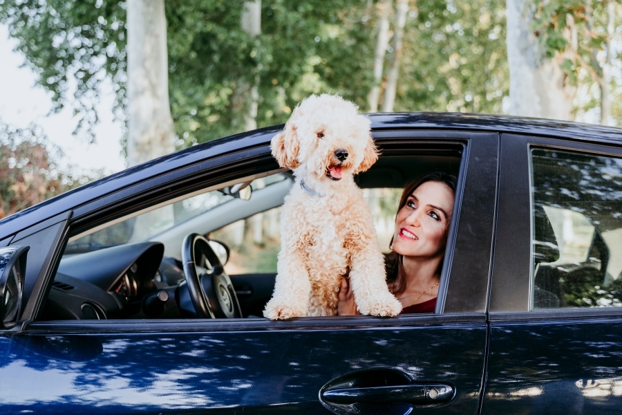 Dog looking out a car window with happy owner