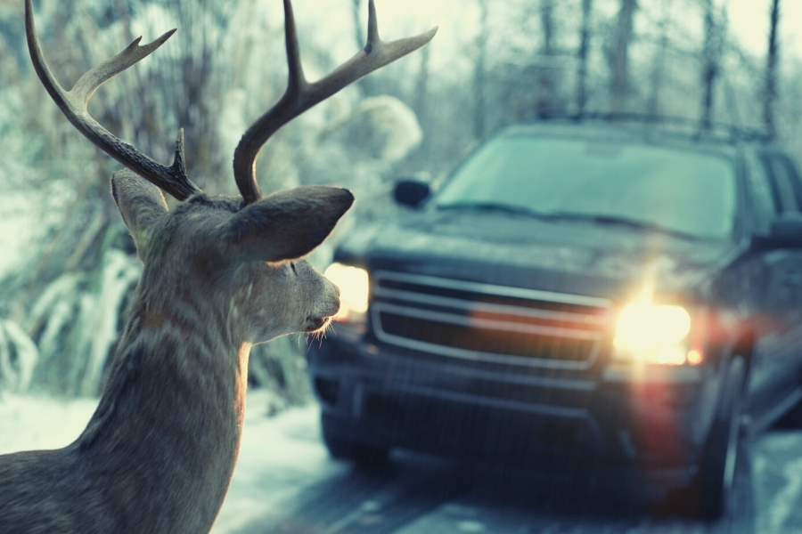 What To Do When You See a Deer in Your Headlights